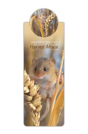 Продукт - Разделител за книга с диви животни - Мишка