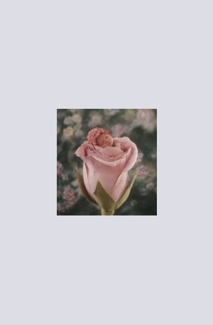 Продукт - Rose Child - 500