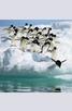 Книга - Календар Pinguine 2014