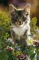 A romantic kitty - 1000