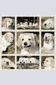 Dog kids - 1000