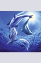 Dolphins at Play - 1000