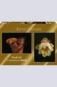 Hollie on lotus flower - 2 x 1000