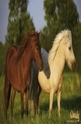 Horse Friends - 100