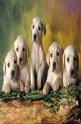 Labrador Retrievers - 500