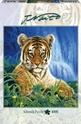 Little Tiger - 1000