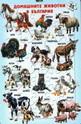 Пъзел домашните животни в България - 35 части