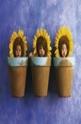 Sunflower Trio - 1000